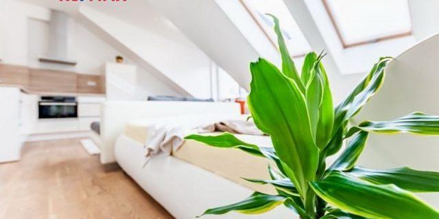 Pronájem bytu 1+kk, Praha 6 – Dejvice